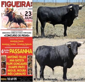 Ganadaria de Passanha regressa amanhã ao Coliseu Figueirense