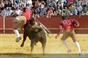 As imagens do festival taurino de Serpa