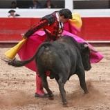 José Alexandre apodera Javier Cortés