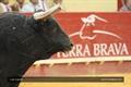 Imagens da Corrida de Gala em Évora