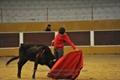 Imagens da Tenta com a Ganadaria Jorge de Carvalho