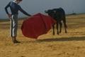 Pedrito tenta na ganadaria Murube