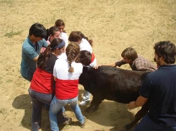 Grupo Feminino de Forcadas de Cascais treinam com entusiasmo
