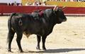 Imagens da Corrida de Santarém, 3 de Junho 2012