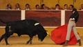 Imagens da 3ª Novilha  integrada no 1º Ciclo de Novilhadas das Escolas de Toureio