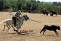 XXXVII Concurso Nacional de Acosso e Derribo em Badajoz