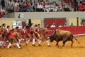 Imagens de Évora ,Tradicional Corrida de Toiros de S. Pedro