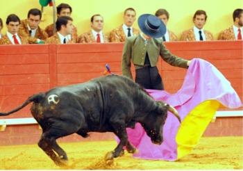 Novos Valores: Pedro Noronha