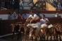 demonstraçao de cernelhas pelos Grupos de Forcados Amadores de Evora e Coruche