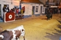 Imagens dos Festejos Populares de Paio Pires
