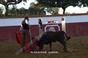 Tenta na ganadaria Pinto Barreiros
