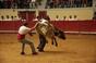 Imagens da Festa do Forcado em Évora