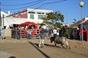Imagens dos Festejos Populares Taurinos de S. Francisco