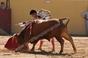 Imagens da novilhada de dia 29 de Junho no Tentadero do Cabo