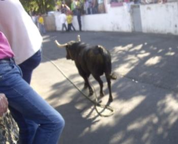 Homem morre vítima de cornada numa Tourada à Corda em S. Jorge