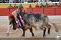 As imagens da corrida da Moita