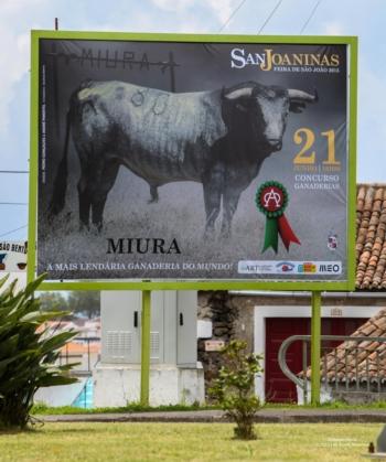 Um toiro de Miura abrirá as Sanjoaninas de 2015