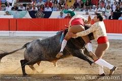 33.º Concurso de Ganadarias - Onde estava a Bravura?