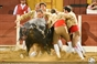 As imagens da corrida de Beja - Amadores de Cascais vencem troféu