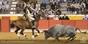 As imagens da corrida de Almeirim