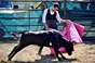 Imagens da aula prática de toureio em Vila Verde de Ficalho