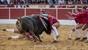As imagens do festival do Montijo