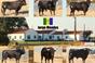 Os toiros para a corrida de 4 de Setembro de 2016 em Montemor-o-Novo