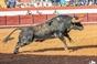 As imagens da corrida de Coruche